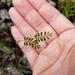 Phyllanthus pentaphyllus - Photo (c) EEL Program, algunos derechos reservados (CC BY-NC)