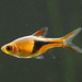 Cyprinidae - Photo (c) LiChieh Pan, μερικά δικαιώματα διατηρούνται (CC BY-NC-SA)