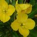 Onagraceae - Photo (c) Steve Ganley,  זכויות יוצרים חלקיות (CC BY-NC)