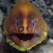 Ankeriaskalat - Photo (c) Klaus Stiefel, osa oikeuksista pidätetään (CC BY-NC)