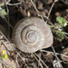 Rocky Mountainsnail - Photo (c) maticus, some rights reserved (CC BY-NC)