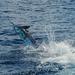 Marlin - Photo (c) 107825510903946183767, algunos derechos reservados (CC BY-NC-SA), uploaded by J Thomas McMurray, Ph.D.