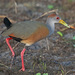 Neotropical Wood-Rails - Photo (c) Jerry Oldenettel, some rights reserved (CC BY-NC-SA)