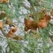 Espina de Invierno - Photo (c) Bernard DUPONT, algunos derechos reservados (CC BY-SA)