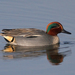 Green-winged Teal - Photo (c) Mark Kilner, some rights reserved (CC BY-NC-SA)