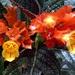 Chrysothemis pulchella - Photo (c) Ramesh NG, μερικά δικαιώματα διατηρούνται (CC BY-SA)