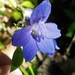 Alabama Larkspur - Photo (c) Roger Birkhead, some rights reserved (CC BY-NC-ND)