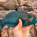 Thalassoma - Photo (c) paul_lennon, some rights reserved (CC BY-NC)