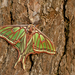 Spanish Moon Moth - Photo (c) paulcools, some rights reserved (CC BY-NC), uploaded by Paul Cools