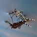 Mosquito Tigre Asiático - Photo (c) Sean McCann, algunos derechos reservados (CC BY-NC-SA)