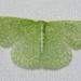 Polillas Esmeralda - Photo (c) Stott Noble, algunos derechos reservados (CC BY-NC)