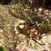 Pagurus hirtimanus - Photo (c) 104623964081378888743, algunos derechos reservados (CC BY-NC), uploaded by David R