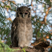 Verreaux's Eagle-Owl - Photo (c) Yvonne A. de Jong, some rights reserved (CC BY-NC-SA)