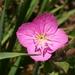 Hierba del Golpe - Photo (c) M, algunos derechos reservados (CC BY-NC)