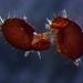 Euphthiracaridae - Photo (c) Al Exis, osa oikeuksista pidätetään (CC BY-NC)