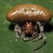 Arañas Bola - Photo (c) kim fleming, algunos derechos reservados (CC BY-NC-SA)