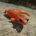 Salamandra Ensatina - Photo (c) randomtruth, algunos derechos reservados (CC BY-NC-SA)