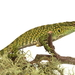 Anolis huilae - Photo (c) Angy Mendoza, μερικά δικαιώματα διατηρούνται (CC BY-NC-ND)