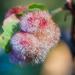 Andricus crystallinus - Photo (c) Ken-ichi Ueda, algunos derechos reservados (CC BY)