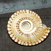 Staircase Shells - Photo (c) Bill & Mark Bell, some rights reserved (CC BY-NC-SA)