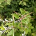 Berberis chilensis - Photo (c) sofia_floresm, μερικά δικαιώματα διατηρούνται (CC BY-NC)