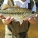 Spotted Bass - Photo (c) ambermonlezun, some rights reserved (CC BY-NC)