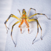Typical Spiders - Photo (c) Rick McNelly, some rights reserved (CC BY-NC)