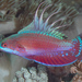 Wrasses - Photo (c) Mark Rosenstein, some rights reserved (CC BY-NC-SA)
