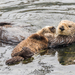 Southern Sea Otter - Photo (c) Mike Andersen, some rights reserved (CC BY-NC-ND)