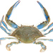Swimming Crabs and Allies - Photo (c) Thomas, some rights reserved (CC BY-NC)