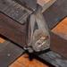 Murciélago Frugívoro Gigante - Photo (c) Douglas Bete, algunos derechos reservados (CC BY-NC)