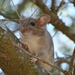 Big-eared Woodrat - Photo (c) randomtruth, some rights reserved (CC BY-NC-SA)