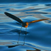 Elliot's Storm-Petrel - Photo (c) David Cook Wildlife Photography, some rights reserved (CC BY-NC)