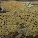 Pyrrhospora quernea - Photo (c) bjoerns, algunos derechos reservados (CC BY-SA)