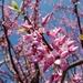 Árboles del Amor - Photo (c) Shihmei Barger 舒詩玫, algunos derechos reservados (CC BY-NC-ND)