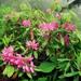 Rhododendron ponticum - Photo (c) Rafael Medina, algunos derechos reservados (CC BY)