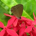 Jamides bochus formosanus - Photo (c) Yaling Lin,  זכויות יוצרים חלקיות (CC BY-NC)
