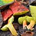 Hortiboletus - Photo (c) Christian Schwarz, μερικά δικαιώματα διατηρούνται (CC BY-NC)