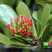 Black Mangrove - Photo (c) Ria Tan, some rights reserved (CC BY-NC-SA)