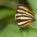 Arawacus aetolus - Photo (c) djhiker, algunos derechos reservados (CC BY-NC)