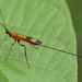 Ichneumonid and Braconid Wasps - Photo (c) djhiker, some rights reserved (CC BY-NC)