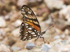 Mariposa Pasionaria de Alas Largas - Photo (c) Bill Bouton, algunos derechos reservados (CC BY-NC)