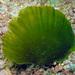Algas Verdes - Photo (c) Blogie Robillo, algunos derechos reservados (CC BY-NC-ND)