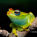 Frogs and Toads - Photo (c) Jonathan Kolby, some rights reserved (CC BY-NC-ND)