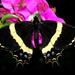Mariposa Cometa Quexquémetl - Photo (c) Ale Türkmen, algunos derechos reservados (CC BY-NC-SA)