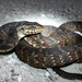 Culebras Acuáticas - Photo (c) Michiko, algunos derechos reservados (CC BY-NC)