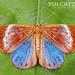 Mariposa Joya Gigante - Photo (c) Eduardo Axel Recillas Bautista, algunos derechos reservados (CC BY-NC)