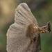 Coltricia perennis - Photo (c) aarongunnar, algunos derechos reservados (CC BY-NC)