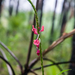 Stachytarpheta miniacea - Photo (c) B Mlry, algunos derechos reservados (CC BY-NC)