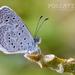 Mariposa Azul con Puntos Negros - Photo (c) Eduardo Axel Recillas Bautista, algunos derechos reservados (CC BY-NC)